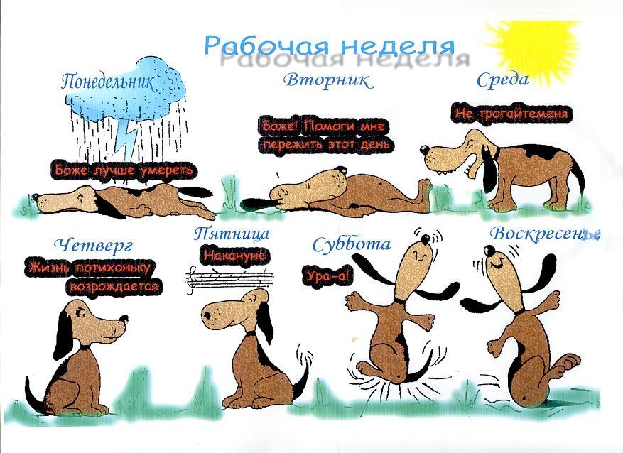 http://luisi.ru/prikol_550.jpg
